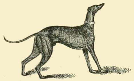 Greyhound_Drawing