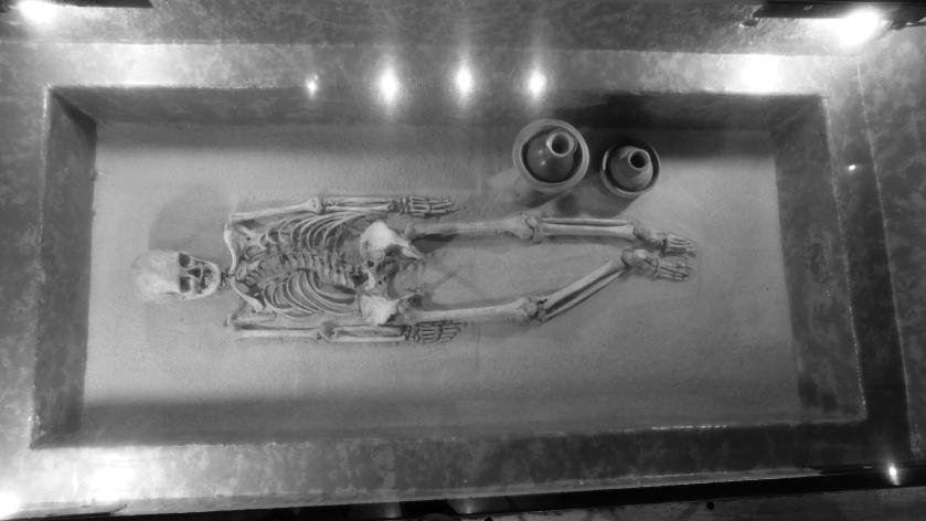 Museum skeleton
