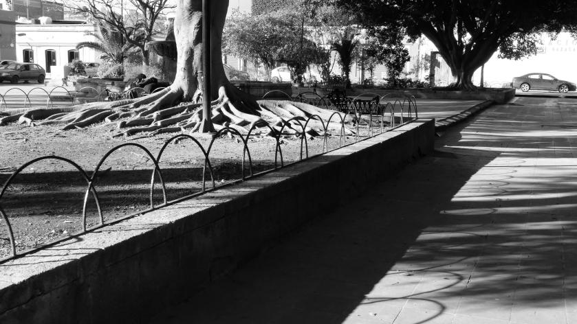 Tree shadows car